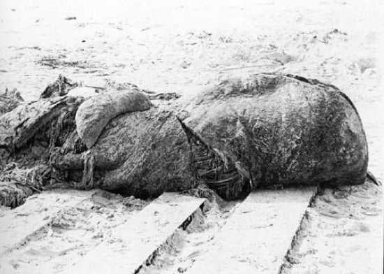 20061007201127st_augustine_carcass