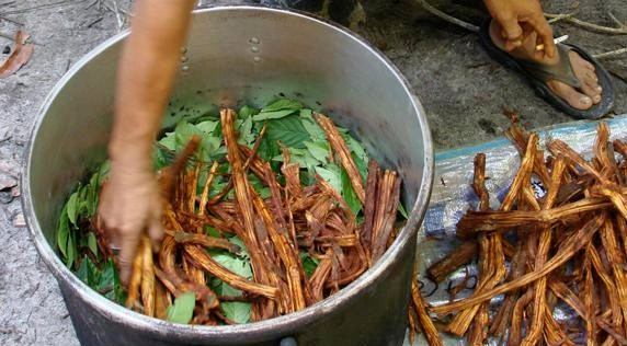 ayahuasc_0