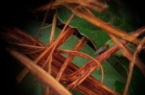 ayahuasca1-930x620