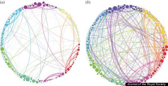 Slika lijevo prikazuje povezanost mreža u mozgu kod ispitanika na plecebu, dok slika desno prikazuje iznimnu povezanost kod ispitanika pod djelovanjem psilocibina.