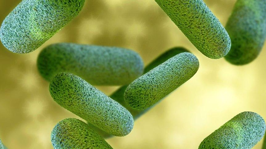 Probiotici – čudotvorni čuvarizdravlja