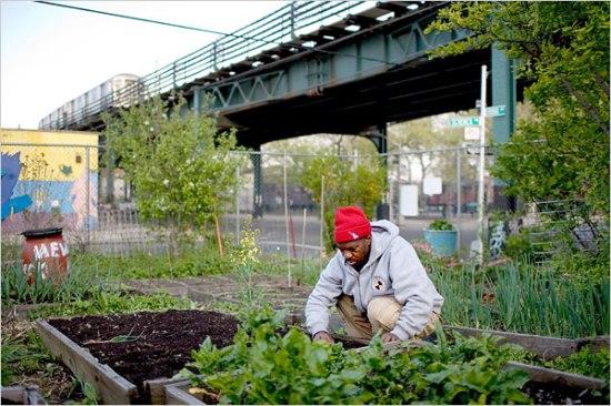 Ljudi izgrađuju ogromne farme na ruševinama Detroita