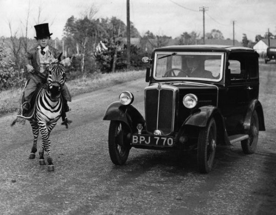 7th December 1935: A motorist pauses as Laffin Leslie, an 18-year-old dwarf, guides Jimmy, the 'only rideable zebra in the world', across a road in Berkshire. (Photo by Fox Photos/Getty Images)