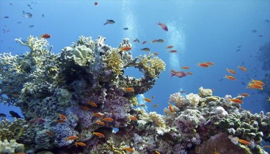 koralji 3 os uma