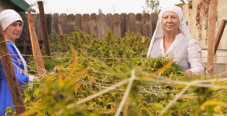 Redovnice koje uzgajajukanabis