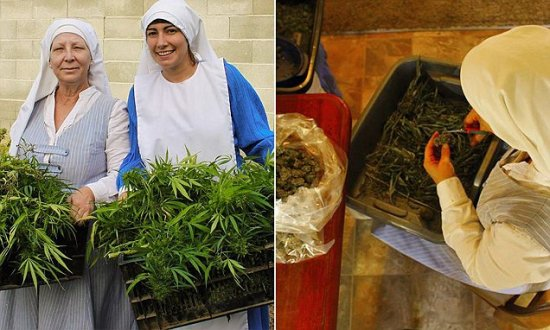 redovnice marihuana os uma