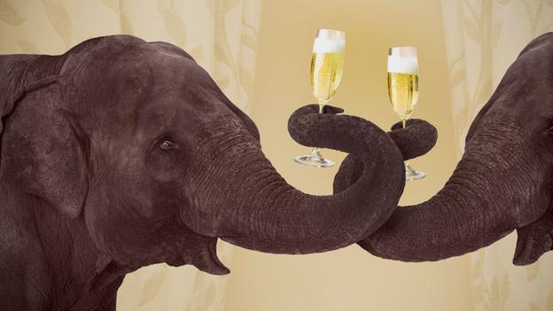 Životinje koje se opijaju ili drogiraju više negoljudi