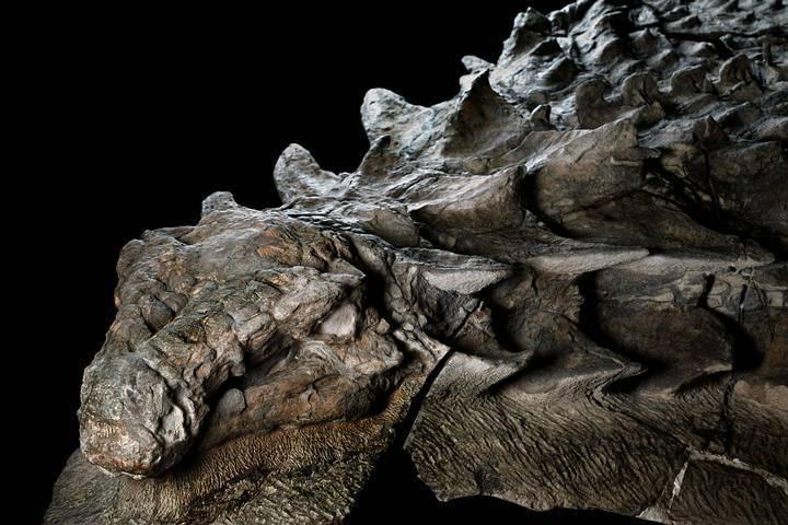 Otkriven najbolje očuvan fosil dinosaura nasvijetu!