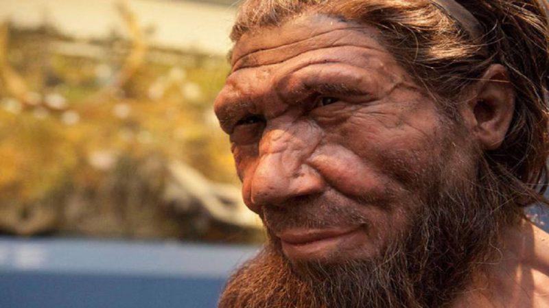 U genomu neandertalca nema ljudskeDNK!