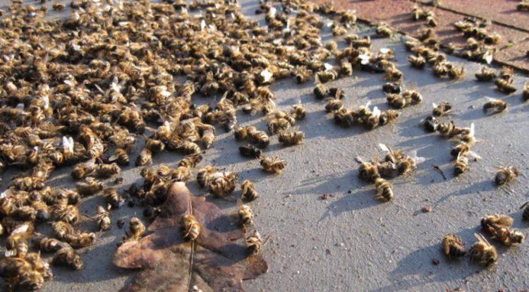 Gljivice uzrokom pomora šišmiša, pčela ižaba?