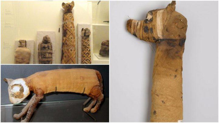 Zašto su Egipćani mumificirali iživotinje?
